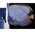 Pesce tropicale chaetodon collare ##STADE## - colore 2