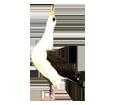 Albatros ##STADE## - colore 16019