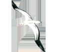 Albatros ##STADE## - colore 5