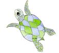 Tartaruga marina caretta ##STADE## - colore 16026