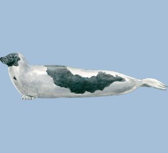 Accogli un animale marino di specie foca