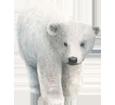 Orso bianco ##STADE## - colore 7