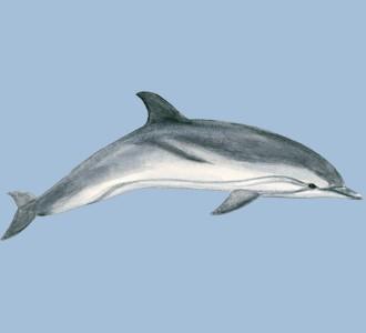 Accogli un animale marino di specie delfino