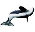 Orca ##STADE## - colore 16022