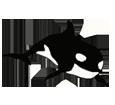 Orca ##STADE## - colore 16023