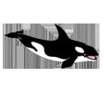 Orca ##STADE## - colore 185