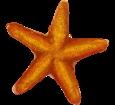 Stella di mare ##STADE## - colore 17