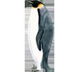 Pinguino imperatore ##STADE## - colore 59